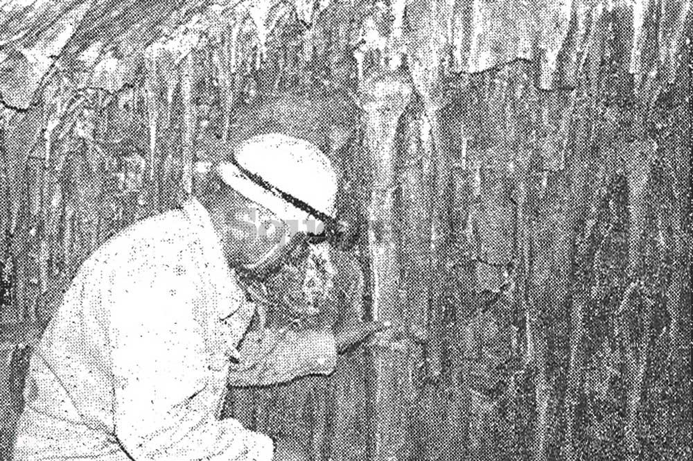 9-Άποψις-του-λιθωματικού-διάκοσμου-στο-κεντρικό-τμήμα-του-σπηλαίου-Αρέθουσα