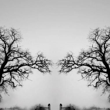 Ο θρύλος των δύο δέντρων